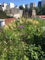 http://epifita.com.ar/files/gimgs/th-55_Terraza-Vegetal-Casa-Epifita-06.jpg